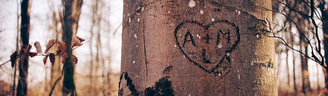 Initials carved into tree